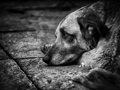 Make a home for stray dogs