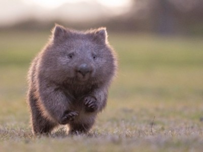 Help ???????End the Itch??????? for Wombats