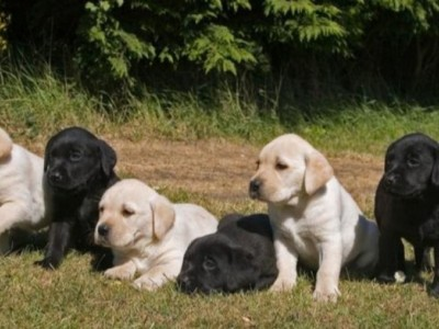 Help to raise these puppies .....