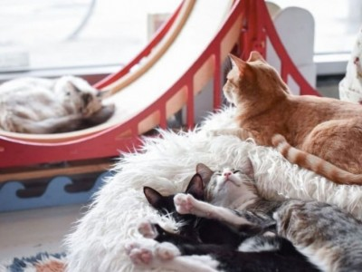 Support & Care for the Rescue Cats of KitTea